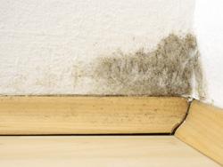 Krank durch Schimmel - So gefährlich ist der Pilz in der Wohnung